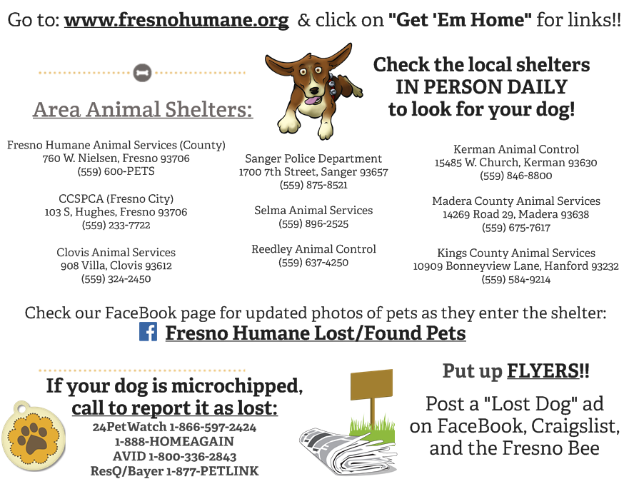 get your pet home graphic