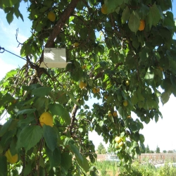 Pest Detection Trapping | County of Fresno